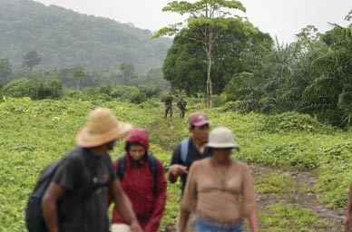 A group of workers in the militarized palm fields of Colombia PAULHACKETT.NET